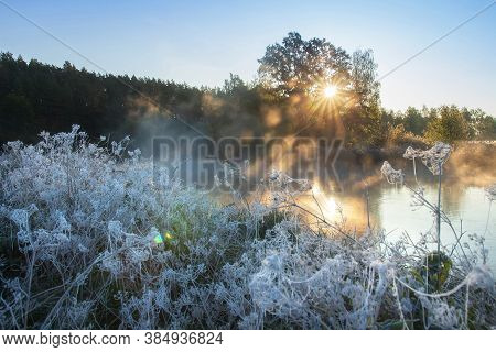 Autumn Nature. Mist Morning. Sunrise. First Frost. Hoarfrost On Dry Grass. Spiderweb In Hoarfrost.