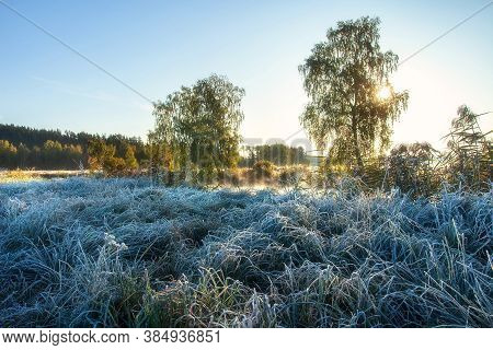 Autumn Scenery. Morning. Early Frosts. Meadow. Hoarfrost On Grass.
