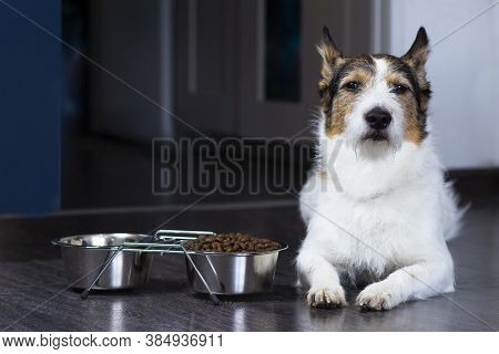 Portrait Of A Dog, The Dog Lies Near His Bowl Of Dry Food, Serious Look. Home Pet Eats At Home.