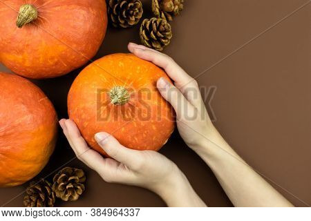 Female Hands Holding Orange Pumpkins, Cones Flat Lay On Brown Background Top View With Copy Space. A