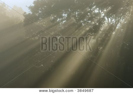 Shafts Of Light