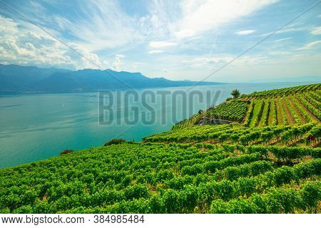 Panoramic Landscape Between Terraced Vineyards Of Lavaux From Lutry And Cully. Lake Geneva And Swiss