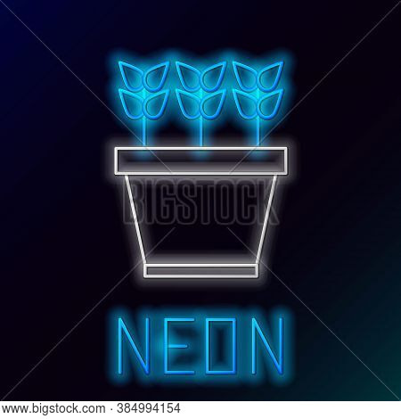 Glowing Neon Line Plants In Pot Icon Isolated On Black Background. Plants Growing In A Pot. Potted P