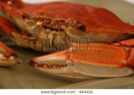 Boiled Crab Up Close