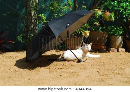Cat Resting Under Umbrella