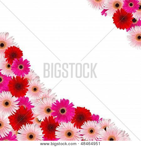 pink and red herbera flowers border