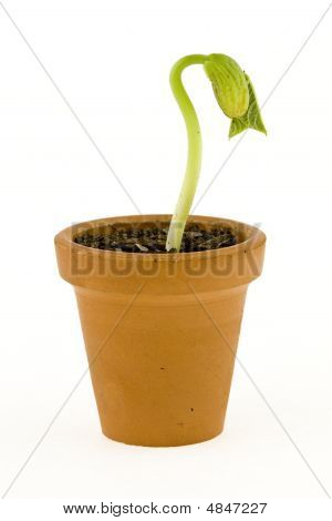 New Life Growing