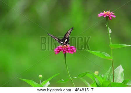 Butterfly at Flowers