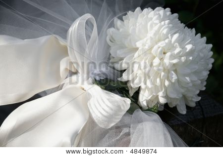 Chrysanthemum H