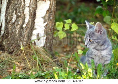 young cute gray cat in grass outdoor poster