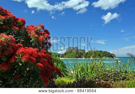 Pohutukawas In Full Bloom At Kaiteriteri Beach, New Zealand