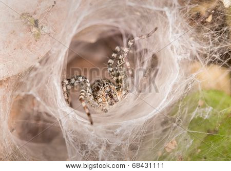 Spider In White Radiation