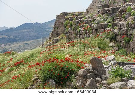 Poppies Grow Among Greek Ruins