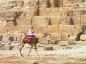 Photo of Arabic camel rider in front of Pyramid poster