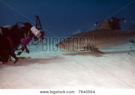 Diver With Tiger Shark