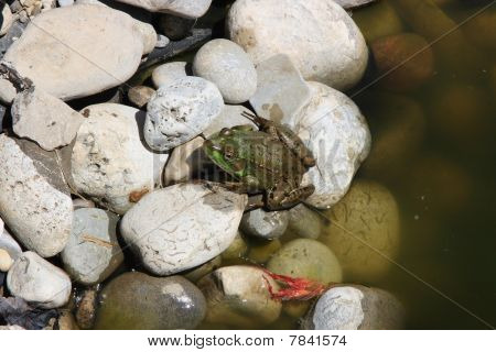 Still Picture of small green frog prepares to jump over the next rocks. poster