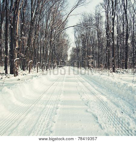 Snowy forest road