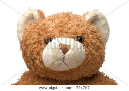 Portrait of my Teddy