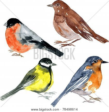 set of watercolor drawing birds