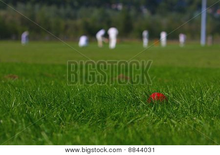 Amateur Cricket Game
