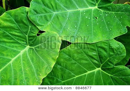 green Leaf And Water Droplet