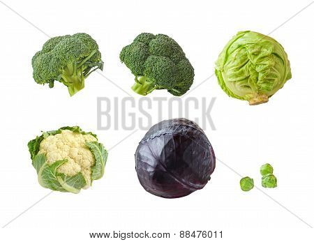 Set Broccoli Isolated