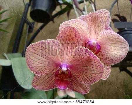 Pretty Pinkish & Purple Flowers