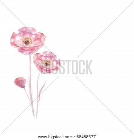 Pink watercolor Rose flower vector