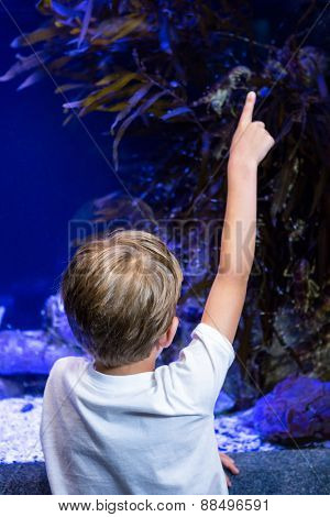 Young man pointing something in a tank at the aquarium