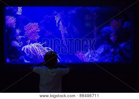 Young man looking at algae tank in a darkest room at the aquarium
