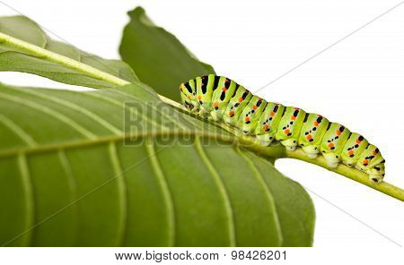 Side View Of Caterpillar On Leaf