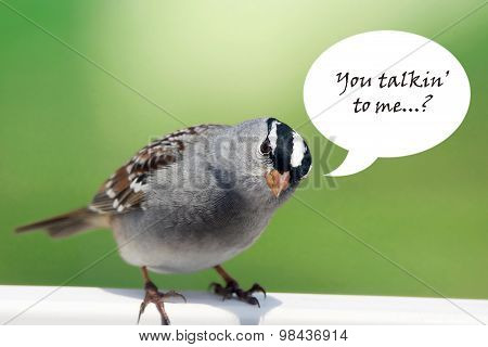 White-crowned Sparrow With Speech Bubble