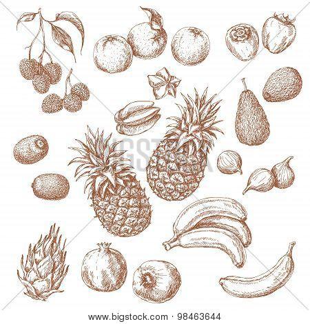 Set Of Tropical Fruits Sketch