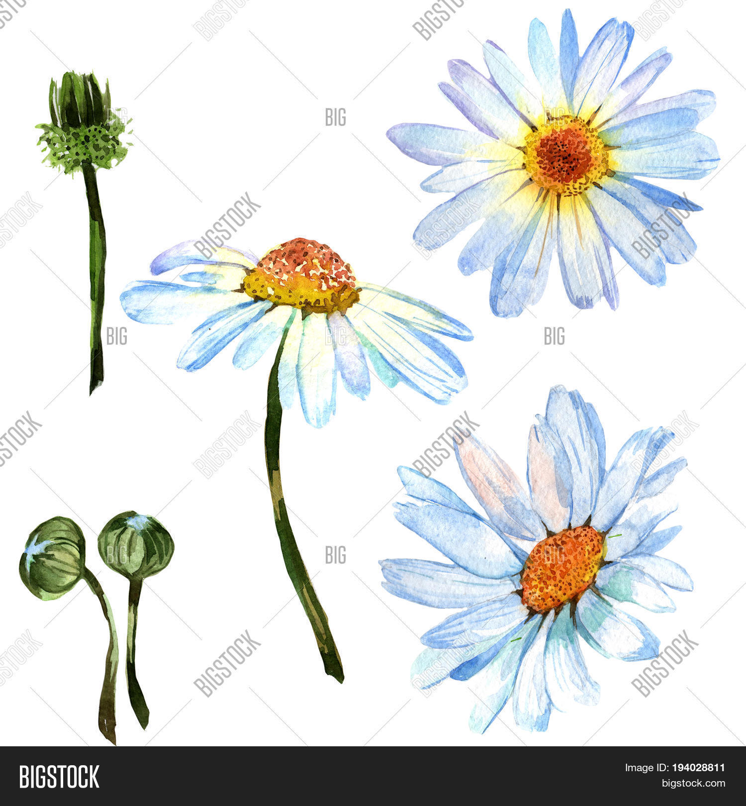 Wildflower Daisy Image Photo Free Trial Bigstock