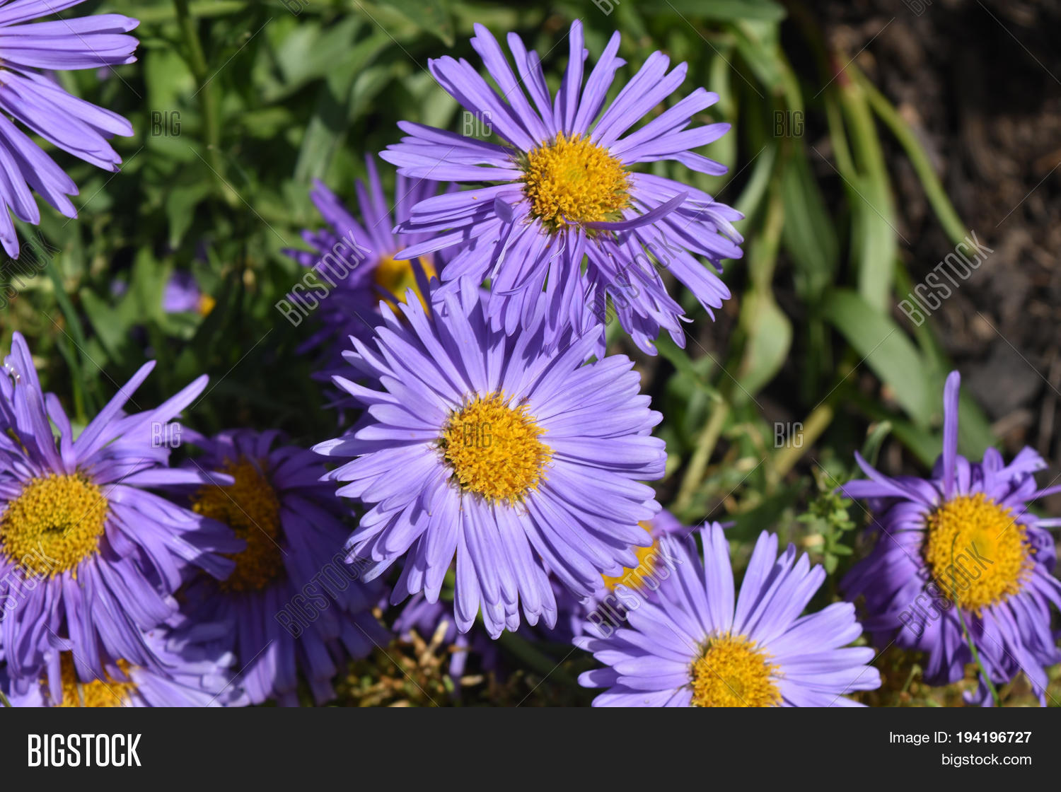 Gorgeous Bloomed Image Photo Free Trial Bigstock