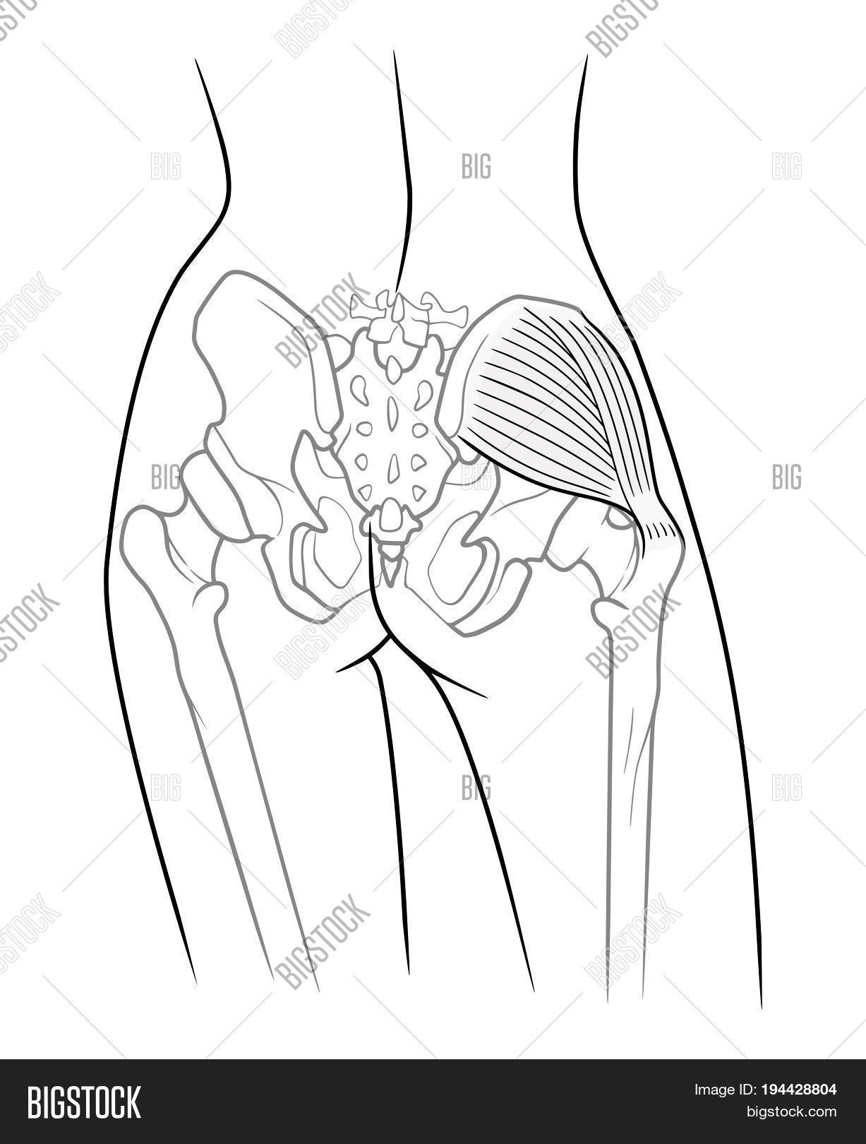 Internal Structure Image & Photo (Free Trial) | Bigstock