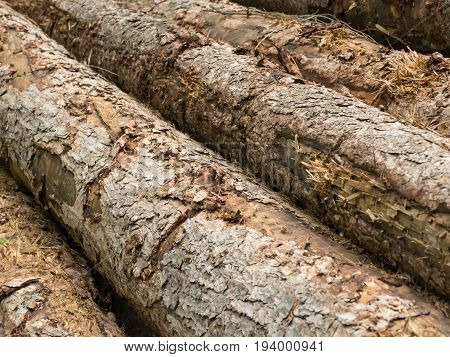 Felled tree trunks in the forest diagonal view