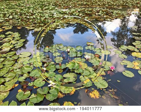 Lilies in a pond with a reflection of the sky clouds and trees in the pond water. A double fragmented circle in the picture with space for text.