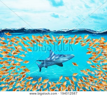 Goldfishes group surround the big shark. Concept of unity is strenght, teamwork and partnership