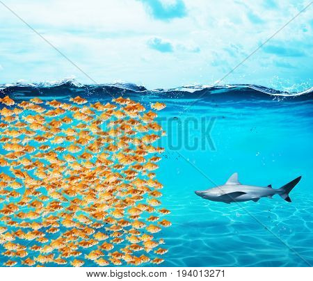 Goldfishes group make a big wall against the shark. Concept of unity is strenght, teamwork and partnership
