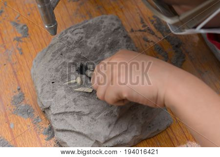 kid excavating Spinosaurus bones from a rock