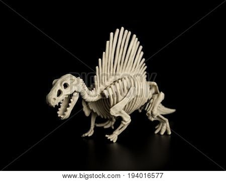 a spinosaurus skeleton on a black background