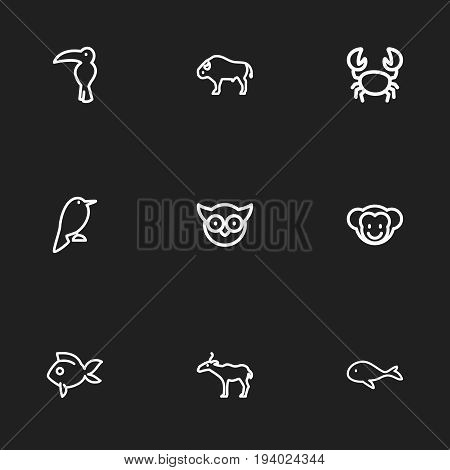 Set Of 9 Editable Animal Icons. Includes Symbols Such As Philomel, Crab, Predator Bird And More. Can Be Used For Web, Mobile, UI And Infographic Design.