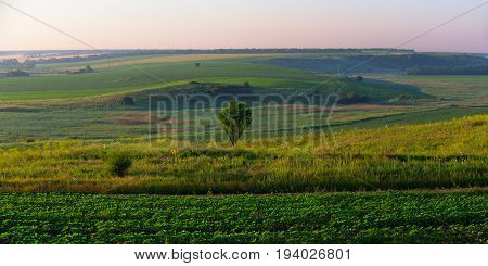 Open space with the hill agricultural fields and aloone the standing tree in the center. Russia Krasnodar Krai Kuban.