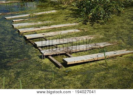 An image of a green marshy swamp with wooden debris.