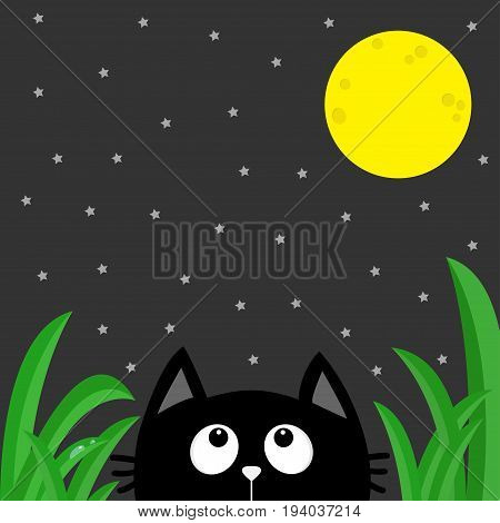 Black cat looking stars and moon in the dark night. Green grass dew drop. Cute cartoon character. Kawaii romantic animal. Love Greeting card. Flat Gray background. Isolated. Vector illustration