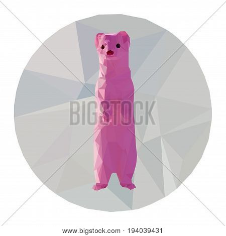 Pink polecat for any types of using