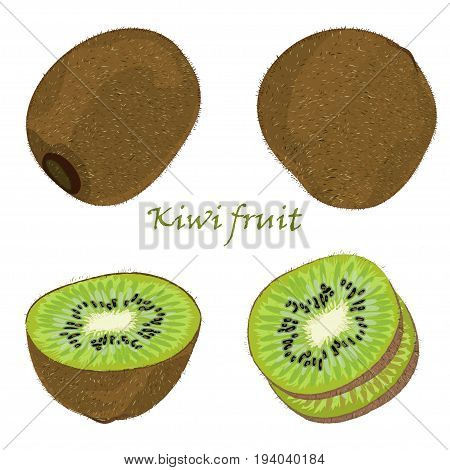 Set of hand-drawn kiwi fruit, single, peeled and sliced fruits. realistic drawing, isolated on white background. Vector illustration