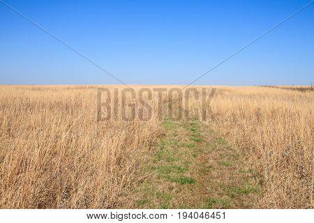Trail pathway cutting through a Midwest prairie