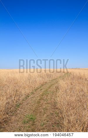Pathway leading through the prairie shot in a vertical frame.